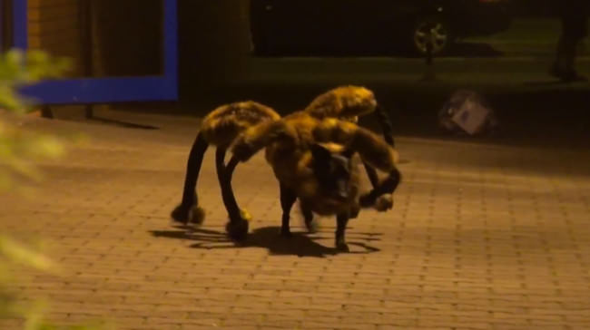 giant spider dog prank
