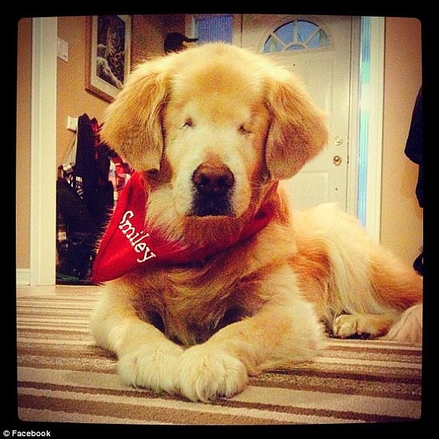 Smiley the blind dog5