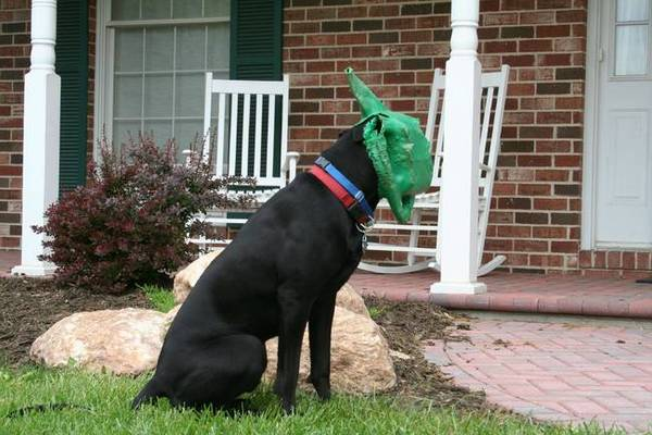 dogs who immediately regret their decision