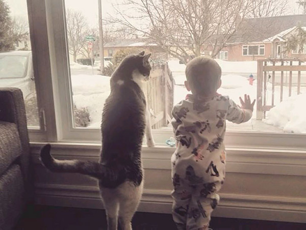 kids and cats together