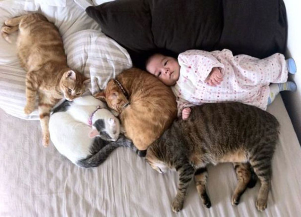 kids and cats together20