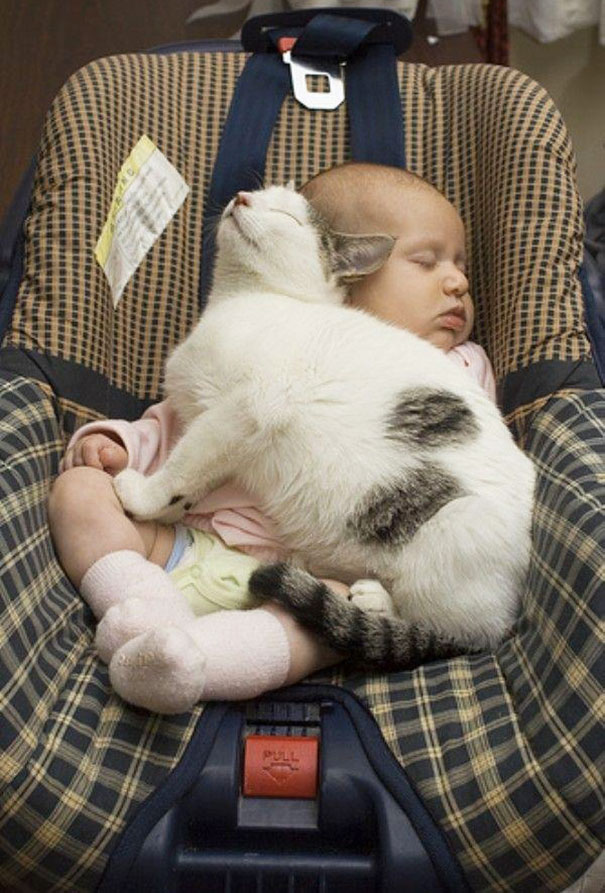 kids and cats together22