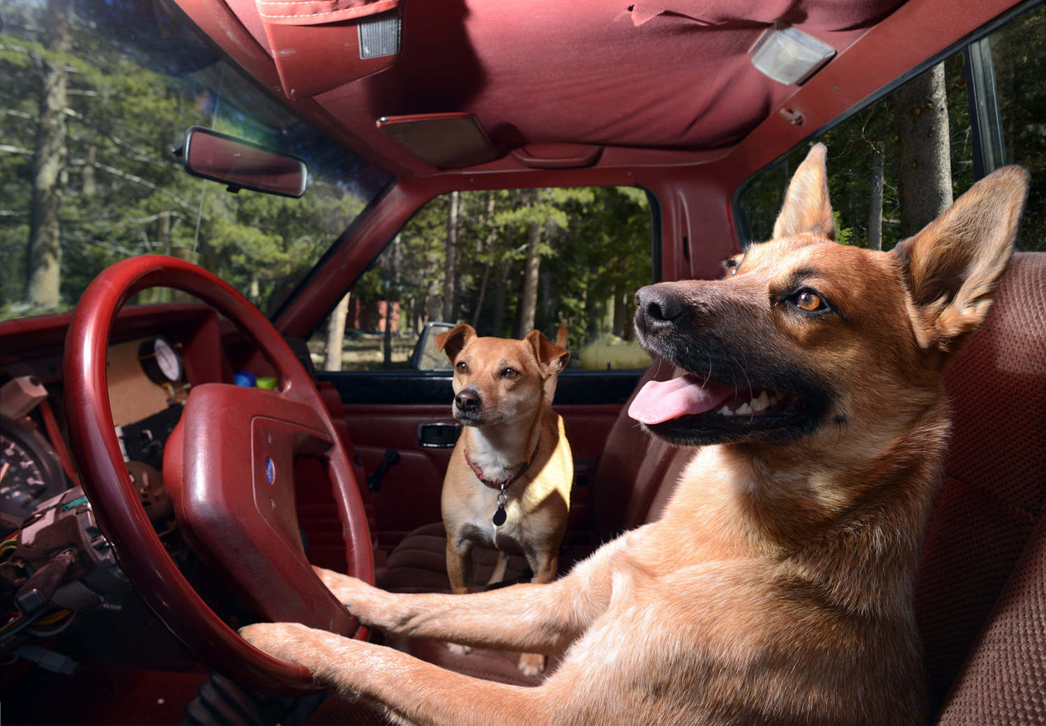 dogs in cars12