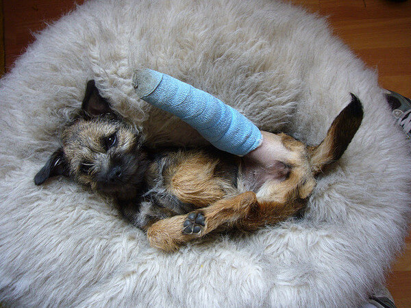 puppies with casts 13