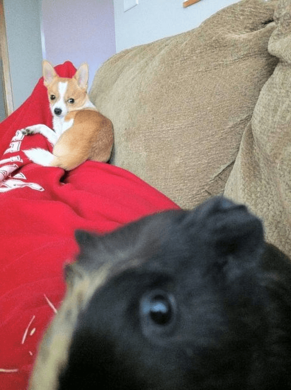 funniest animal photobombs 13