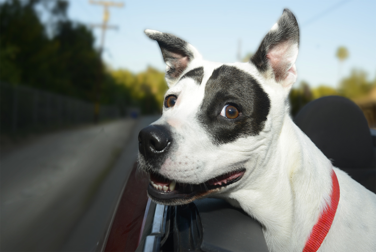 dogs in cars13