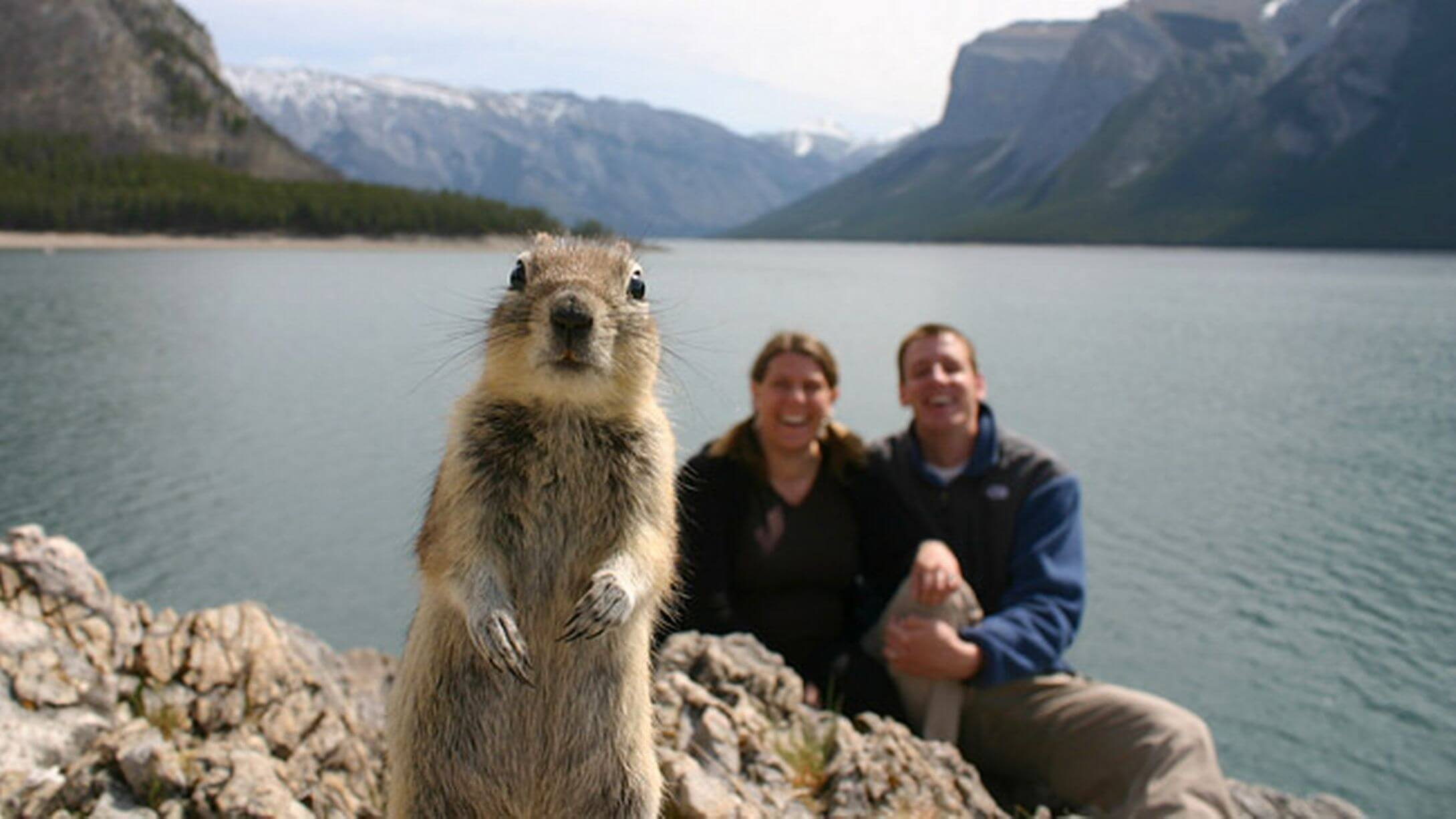 funniest animal photobombs 35