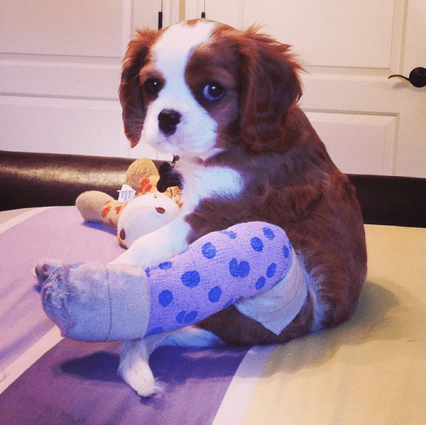 puppies with casts 5