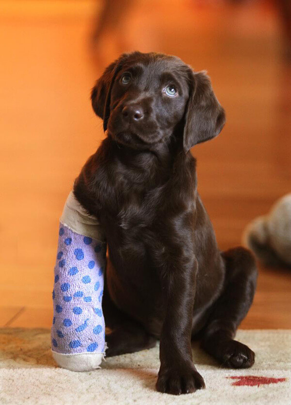 puppies with casts 1