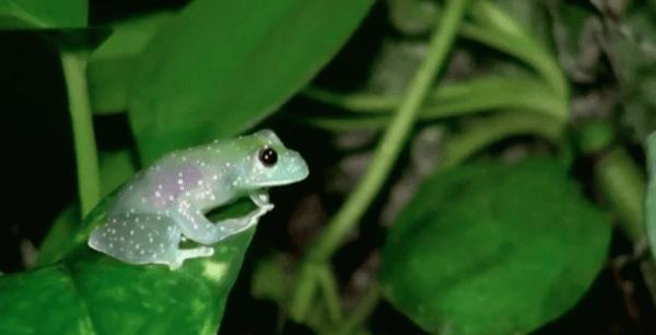 kermit the frog lookalike