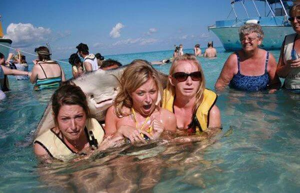 funniest animal photobombs 5