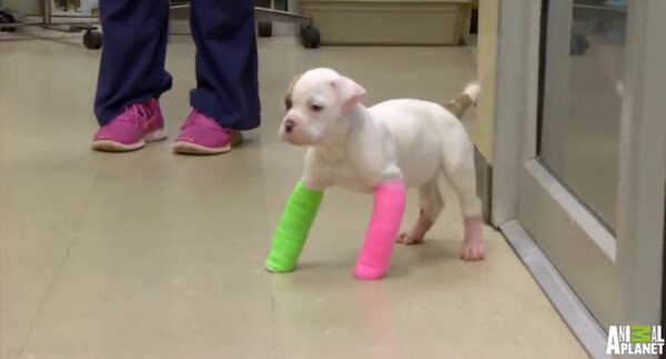 puppies with casts 18