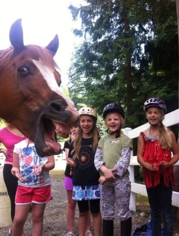 funniest animal photobombs 22