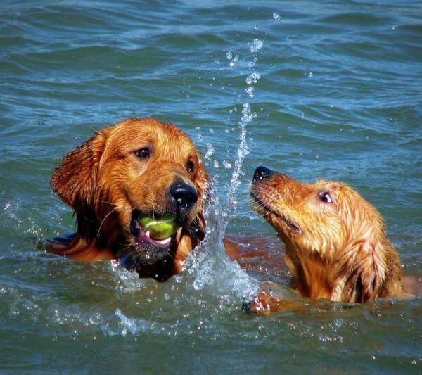 dogs love water 16