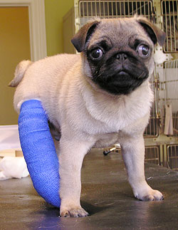 puppies with casts 22