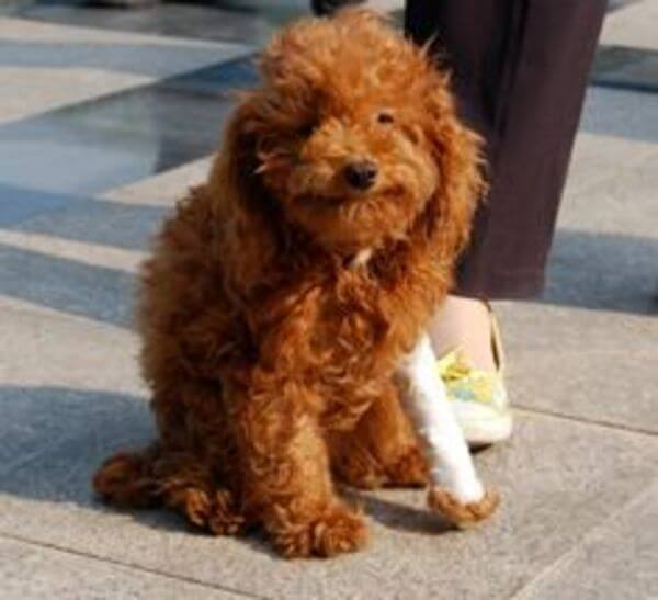 puppies with casts 19