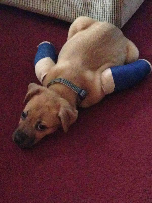 puppies with casts 17