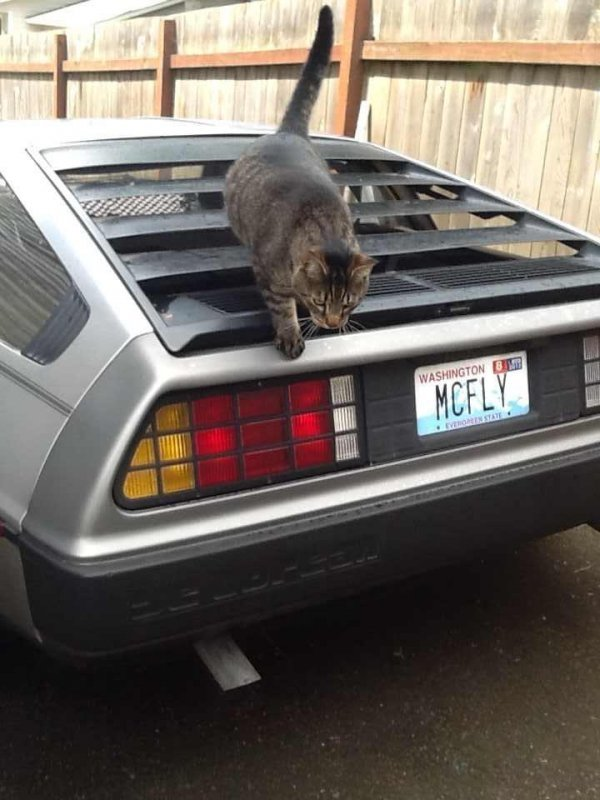 Funny License Plates Humor