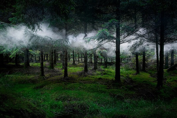 mystical forests images