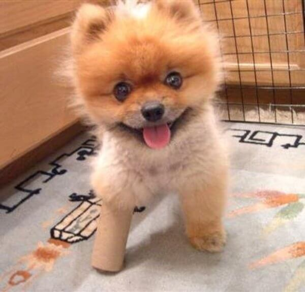 puppies with casts 3