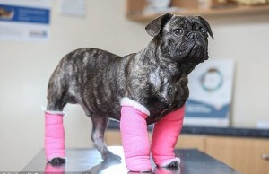 dog cast feat