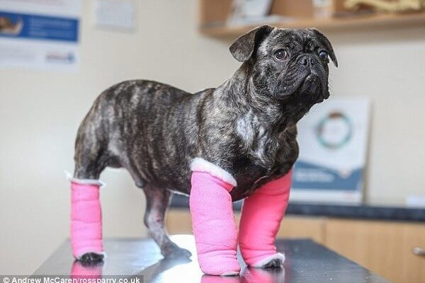 dog cast feat