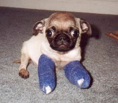 puppies with casts 7