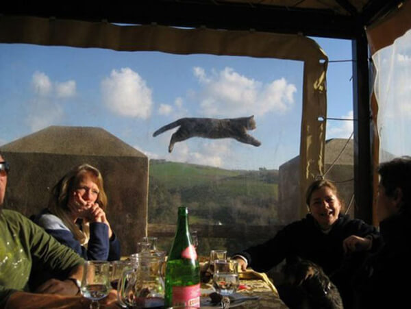 funniest animal photobombs 34