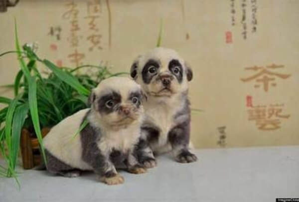 very unusual dogs 3