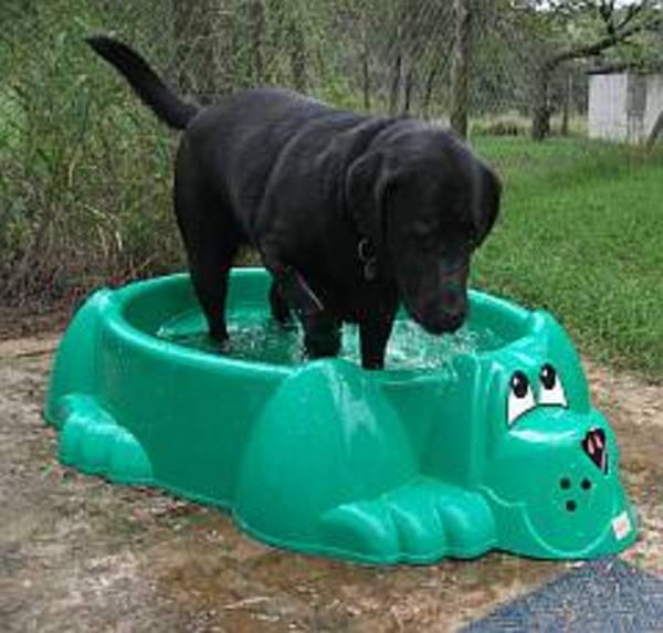 dogs love water 20