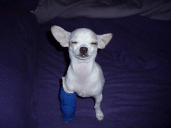 puppies with casts 6