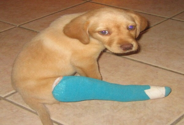 puppies with casts 4