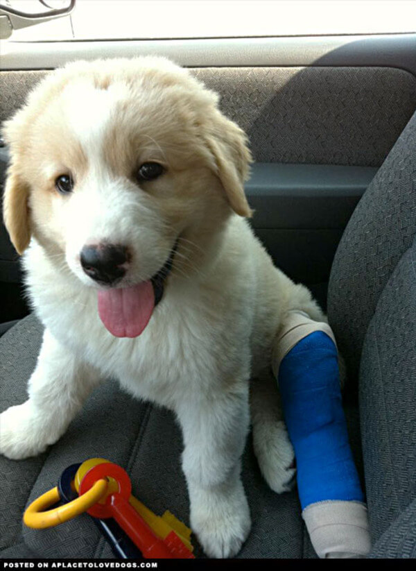 puppies with casts 2