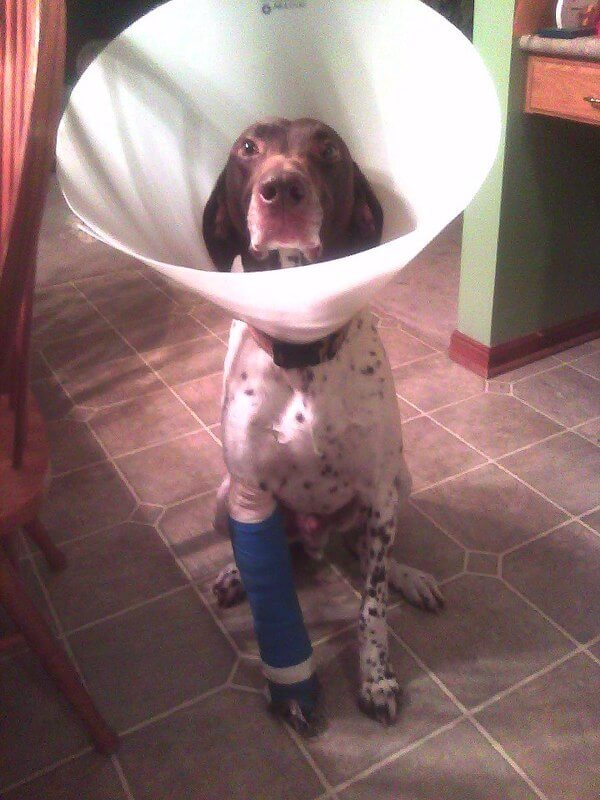 puppies with casts 11