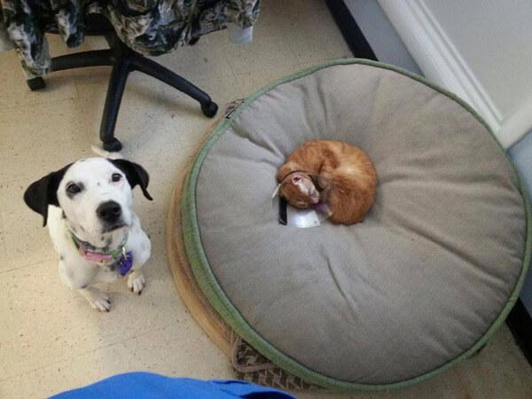 cat nurses other animals