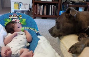 dog and baby bff