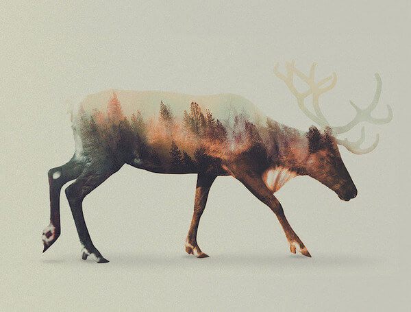 double exposure animals