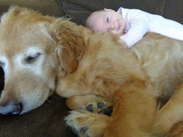adorable pets and babies