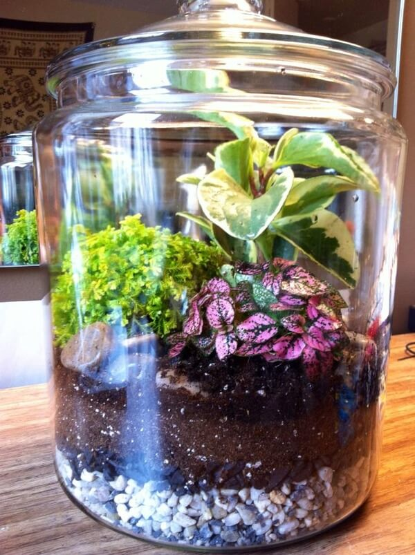21 Incredible Terrariums That Will Show You A World
