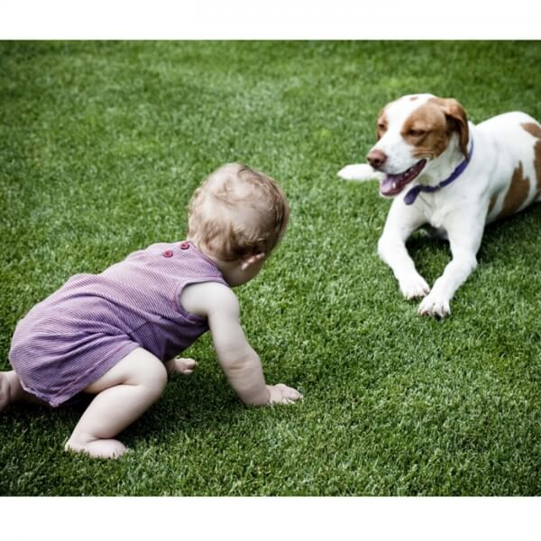 baby-crawling-towards-dog-on-grass_700x700_Getty-173900210