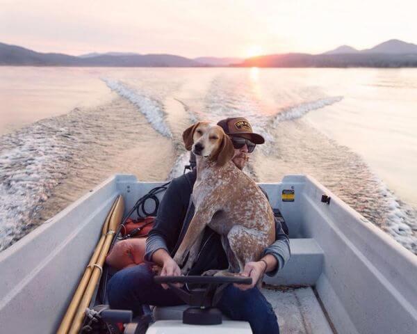 dog traveling car