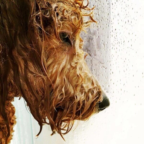 dramatic dogs pictures