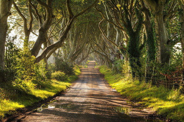 most magnificent trees 20