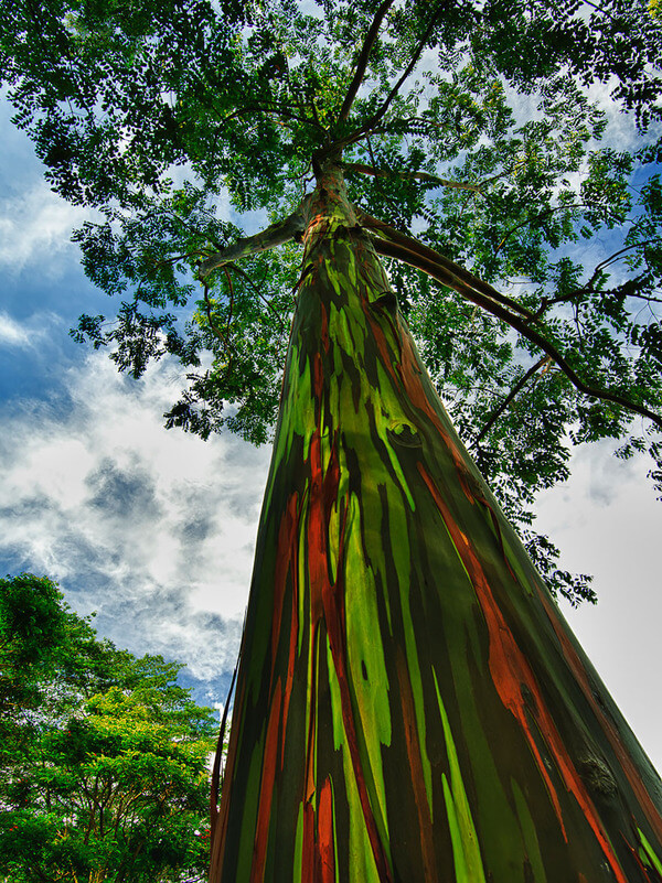 16 Magnificent Trees That Are Way Too Beautiful For This World