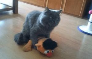 animals getting caught 1