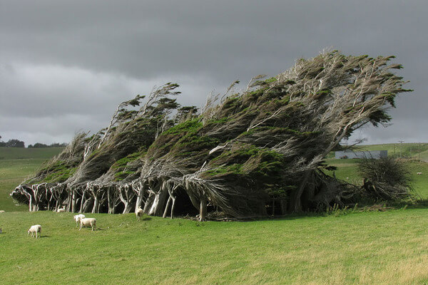 most magnificent trees 4