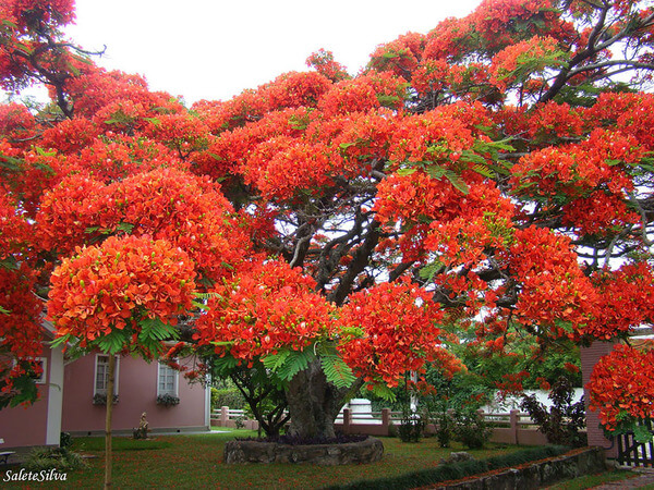 most magnificent trees 10