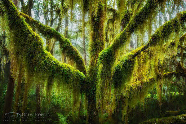 most magnificent trees 7
