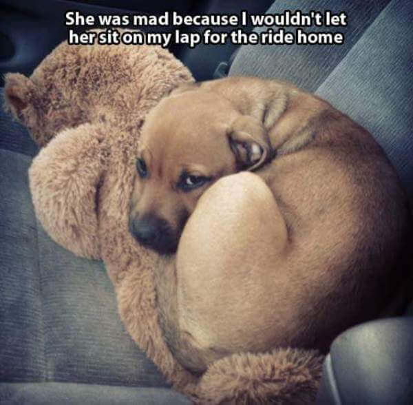 grumpy dogs 1