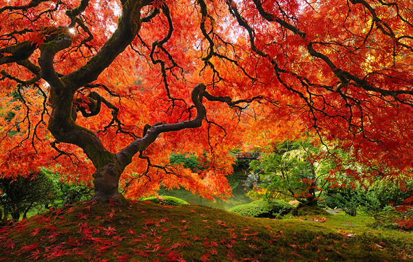 most magnificent trees 6